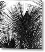 Pine Angels Metal Print