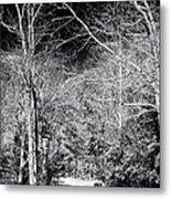 Pine Barrens Path Metal Print by John Rizzuto