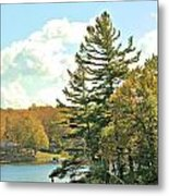 Pine By The Water Metal Print