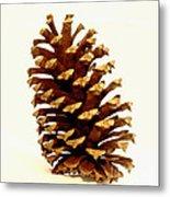 Pine Cone On White Metal Print