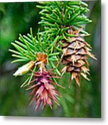 Pine Cone Stages Metal Print
