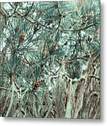 Pine Cones And Lace Lichen Metal Print