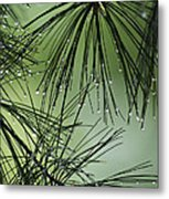 Pine Droplets Metal Print