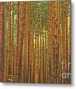 Pine Forest Lienewitz Germany Metal Print