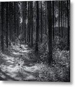 Pine Grove Metal Print