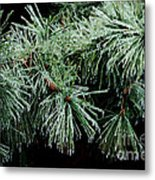Pine Needles In Ice Metal Print by Betty LaRue