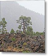 Pine On Lava Metal Print