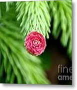Pine Perfection Metal Print