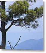 Pine Tree Along The Blue Ridge Parkway Metal Print