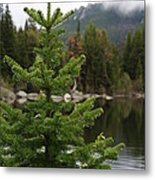 Pine Tree And Rain Drops Metal Print