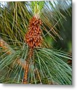 Pine Tree Branch Metal Print