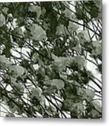 Pine Tree Branches Covered With Snow Metal Print