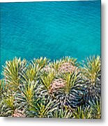Pine Tree Branches With Turquoise Sea Background Metal Print