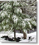 Pine Tree Covered With Snow 2 Metal Print