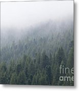 Pine Tree Forest In The Mist Metal Print
