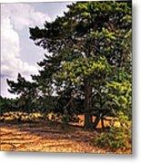 Pine Tree In Hoge Veluwe National Park 1. Netherlands Metal Print