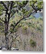 Pine Tree On A Mountain Metal Print