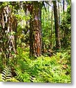 Pine Trees And Ferns Metal Print