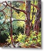 Pine Trees In Sunlight Metal Print