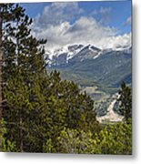 Pine Trees In The Rocky Mountain National Park Metal Print