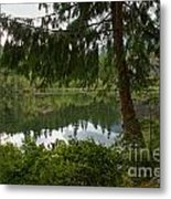 Pine Trees Over Starvation Lake Metal Print