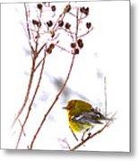 Pine Warbler-img-2143-001 Metal Print
