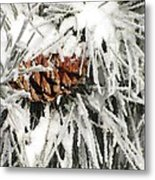 Pinecone In Snow Metal Print