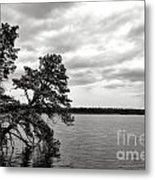 Pinelands Memories Metal Print
