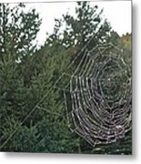 Pining For The Web Metal Print