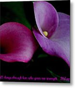 Pink An Purple Calla Lilys Metal Print