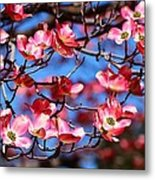 Pink And Blue Metal Print