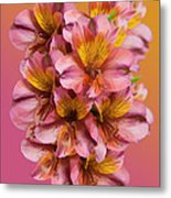 Pink And Gold Metal Print