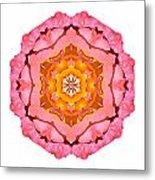 Pink And Orange Rose I Flower Mandala White Metal Print