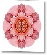 Pink And Orange Rose Iv Flower Mandala White Metal Print