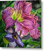 Pink And Purple Lily's Metal Print