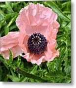 Pink And Purple Poppy Metal Print