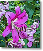 Pink And Sassy...line Art Metal Print