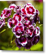 Pink And White Carnations Metal Print