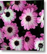Pink And White Daisies Metal Print