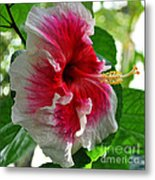 Pink And White Hibiscus Metal Print