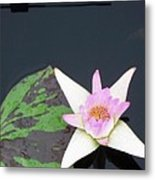 Pink And White Lily Metal Print