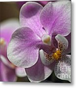 Pink And White Orchid Metal Print