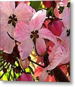 Pink And White Shower Tree Metal Print
