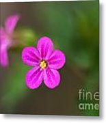 Pink And Yellow Flowers With Green Blurry Background Metal Print