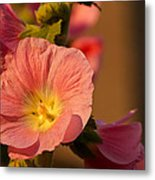 Pink And Yellow Hollyhock Metal Print