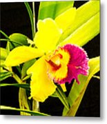 Pink And Yellow Orchid Flower  Metal Print