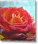 Pink And Yellow Rose With Dew II  Metal Print