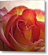 Pink And Yellow Rose With Water Drops Metal Print