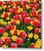 Pink And Yellow Tulips Metal Print