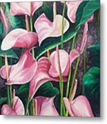 Pink Anthuriums Metal Print